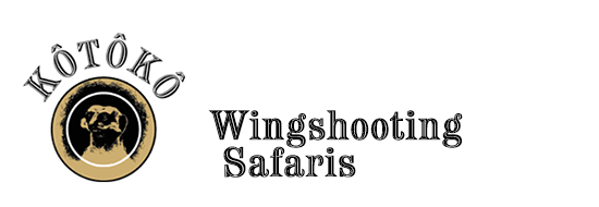 Kotoko Wingshooting Safaris Photo Gallery